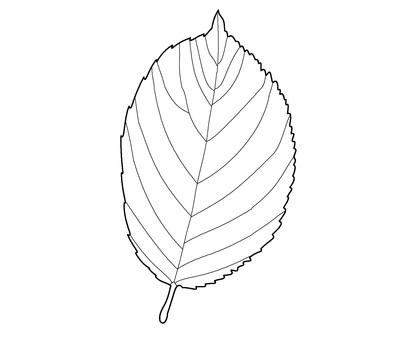 나뭇잎 「벚꽃」의 컬러링