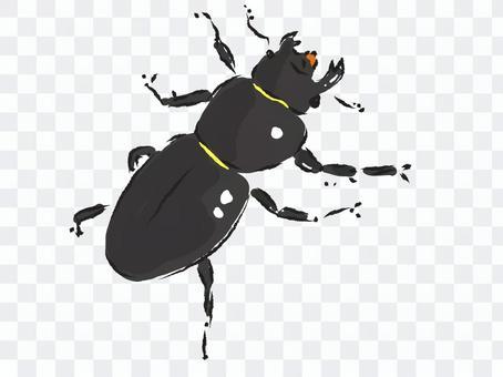 美山鍬蟲(雌性)
