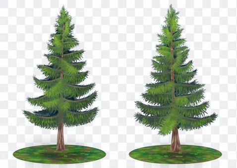 자연 일러스트 ~ 삼나무