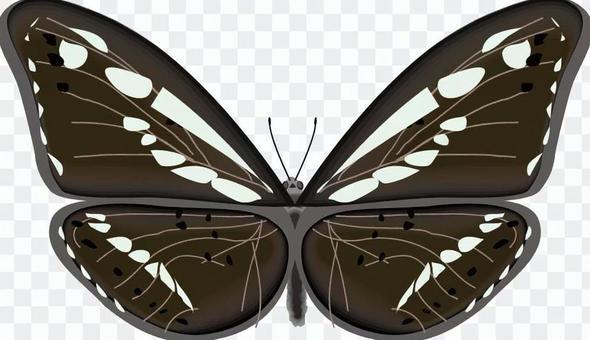コミスジ 蝶 蝶々 タテハチョウ科 昆虫