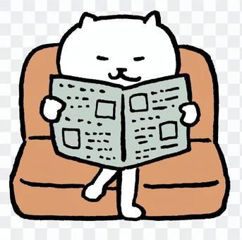 Read cat newspaper