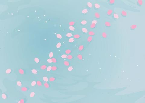 Cherry blossoms petals floating on the water surface 1