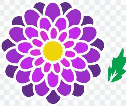 Peony _ purple