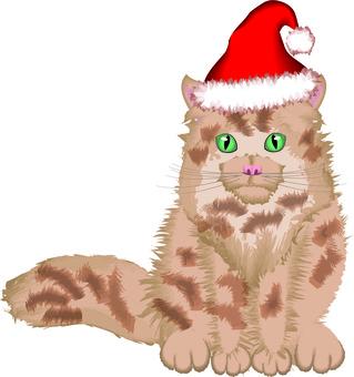 Cat pet Christmas hat