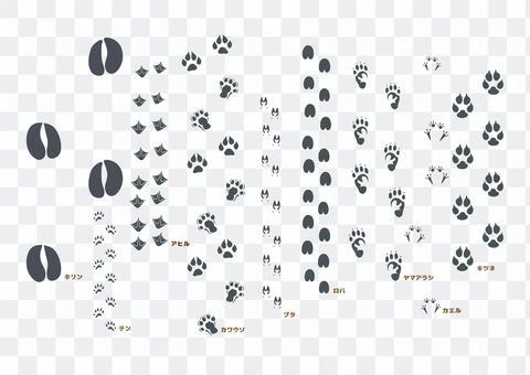 野生動物足跡ブラシセット3
