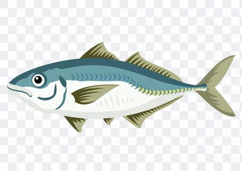 Horse mackerel / horse mackerel