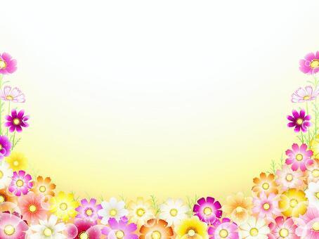 秋向け・コスモス背景・花畑11