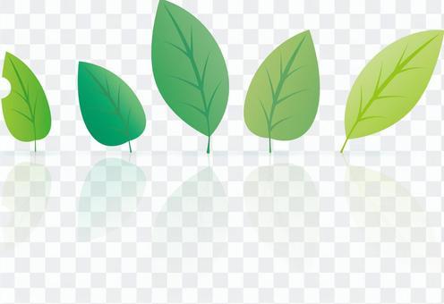 一片葉子的例證