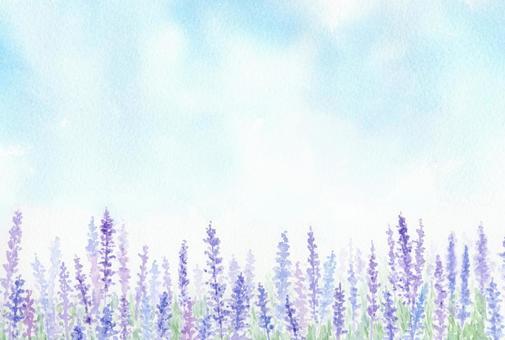 用透明水彩繪製的薰衣草田地