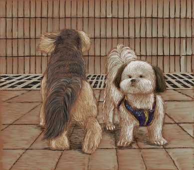 兩隻狗馬耳他