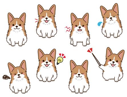 柯基犬(紅白)姿勢合集