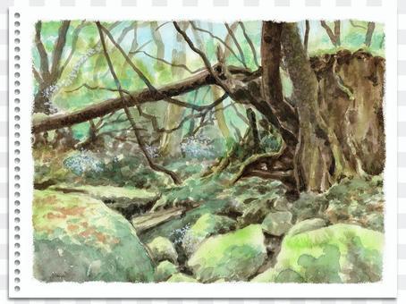 模擬水彩風景畫家屋久島苔蘚森林