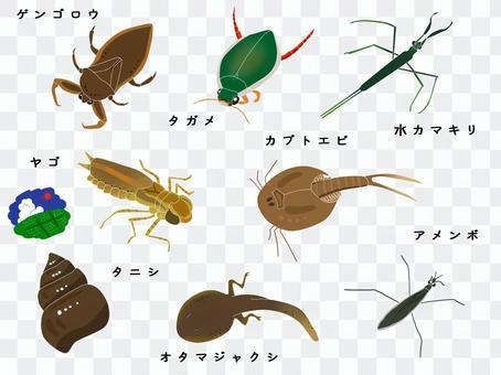 Rice field creatures