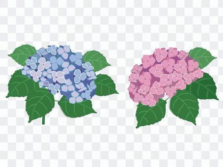花_繡球花