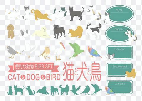 流行的動物裝飾<貓,狗,鳥>