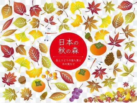 五顏六色的落葉,樹堅果等。