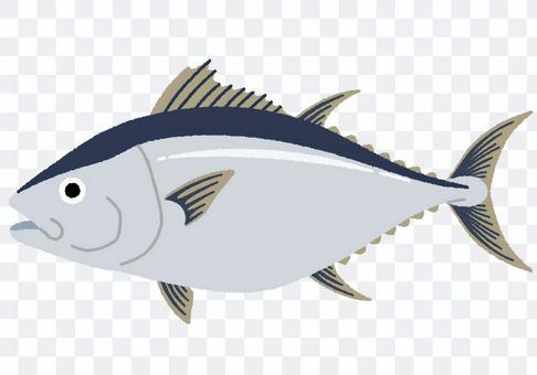 金槍魚的插圖