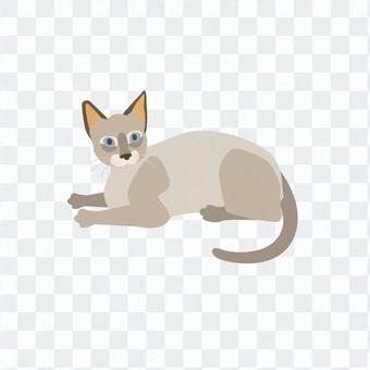 東京貓的人