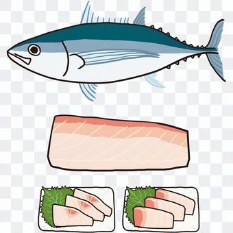 長鰭金槍魚全身