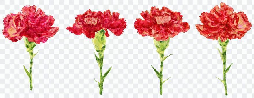 康乃馨四個水彩畫