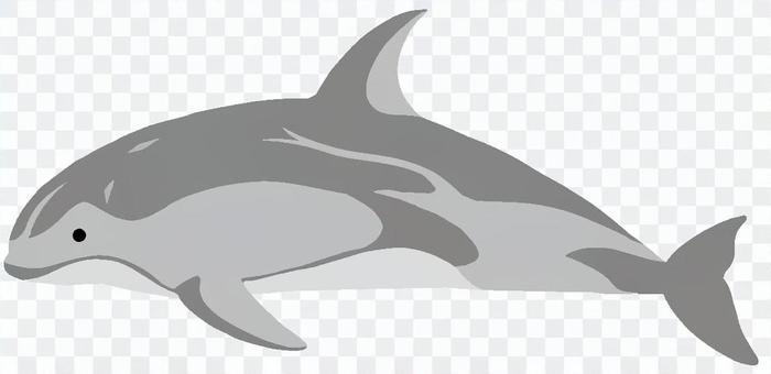 太平洋白海豚
