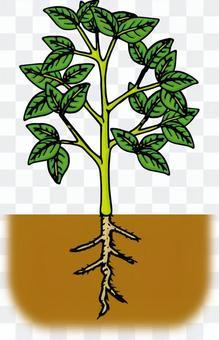 植物/葉/茎/根