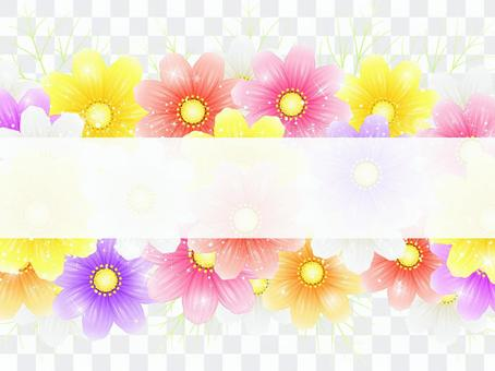 秋向け・コスモス背景・白帯付