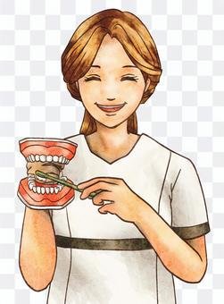 牙齒保健牙醫與牙齒模型