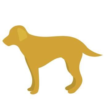 Standing dog brown retriever