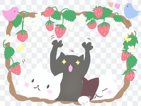 草莓和三隻貓