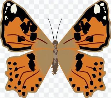 ヒメアカタテハ タテハチョウ科 昆虫