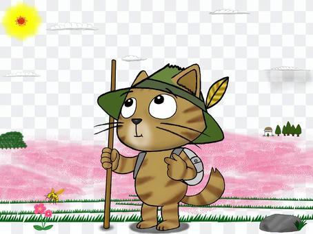 流浪貓茶虎_我來看看草皮櫻花