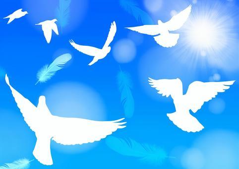 푸른 하늘에 비둘기 깃털 가로