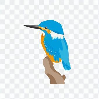 翠鳥(棲息在一個分支)