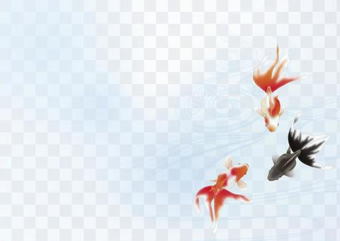金魚和Tanei水_水平大小