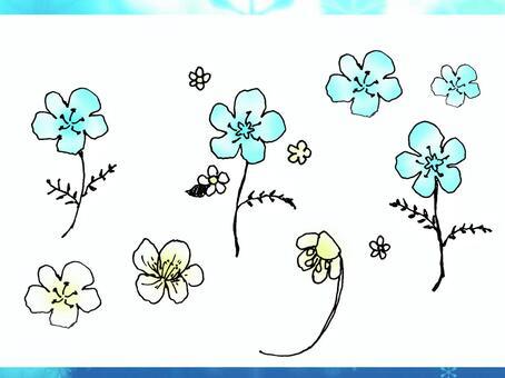 藍色黃色的花