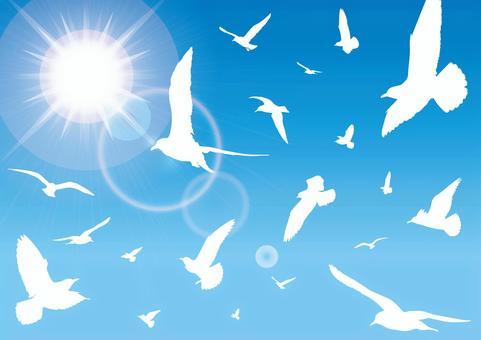 鳥藍天太陽天空飛行