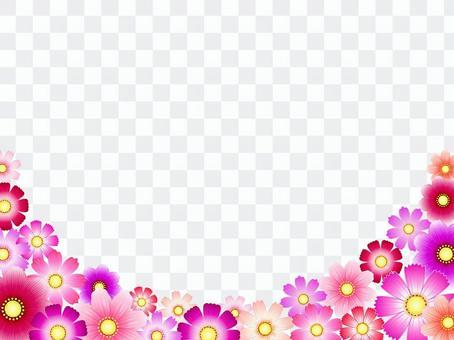 秋向け・コスモス背景7