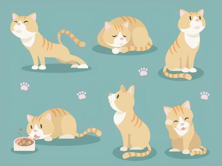 各種各樣的貓_ 02