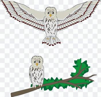 ウラルフクロウ フクロウ 鳥 鳥類 飛ぶ