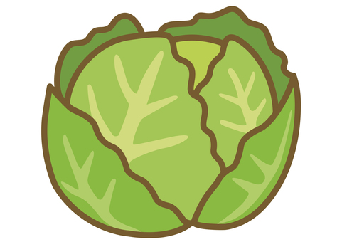 Illustration of cute cabbage