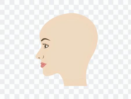 人體頭部模特