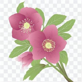Christmas Rose _ Red _ Side