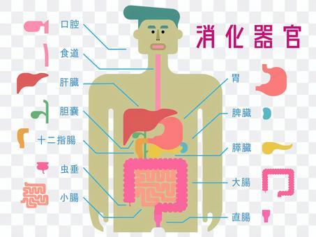 日本語の名称入り消化器官のシンプルな図
