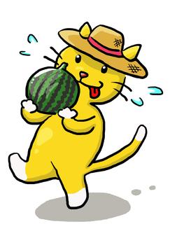 攜帶西瓜的貓