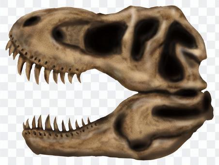 ティラノサウルス頭骨