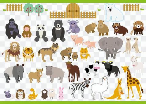 動物園裡的動物沒有背景