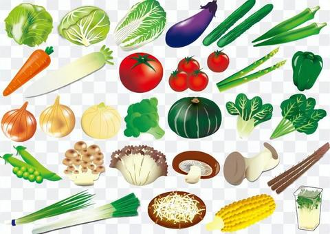 Vegetable illustration material collection