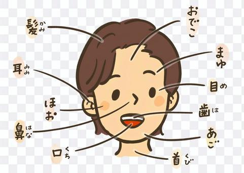 面部名稱:Furigana