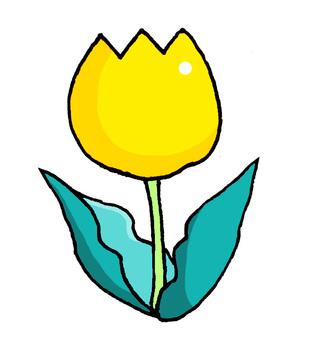 鬱金香黃色